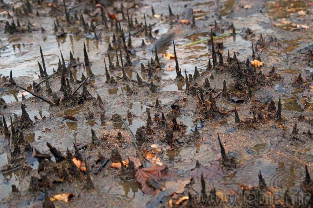 Mais quels étranges matériaux ! Que sont-ce tous ces petits stalagmites ?