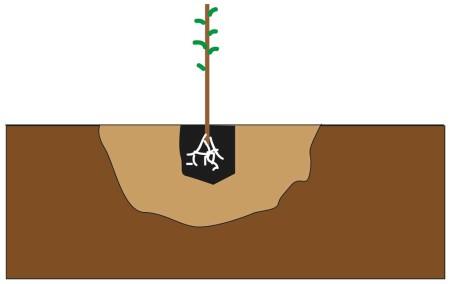 Methode_Plantation_Arbre_Verger